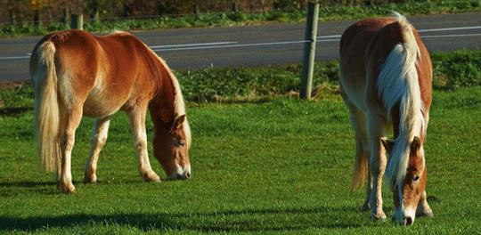 Nos Conseils Pour Mettre Son Cheval Au Pre La Gee Equipement Cheval Et Materiel D Equitation